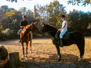 patrick expert cheval-2