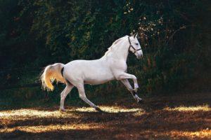 debourrage cheval