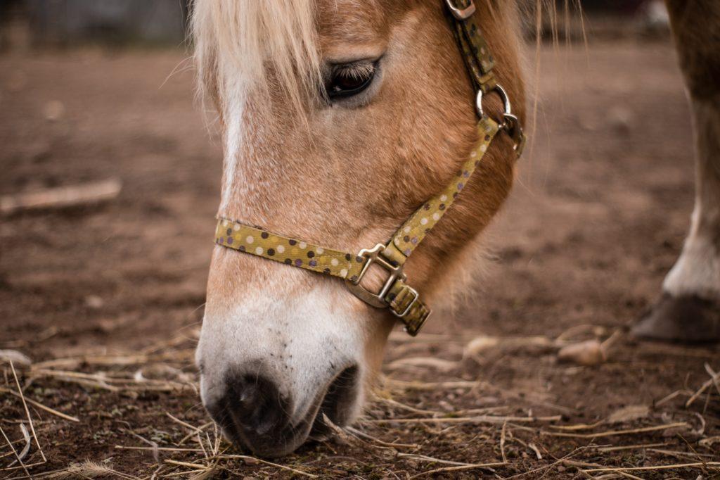 nourriture du cheval