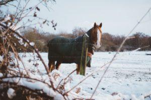 protéger son cheval du froid