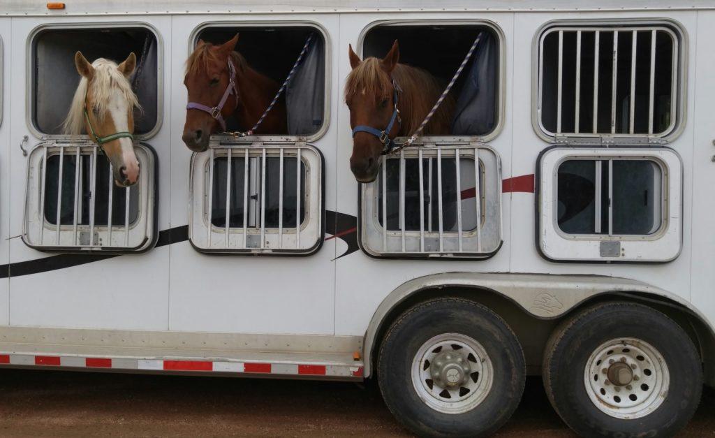 van pour cheval