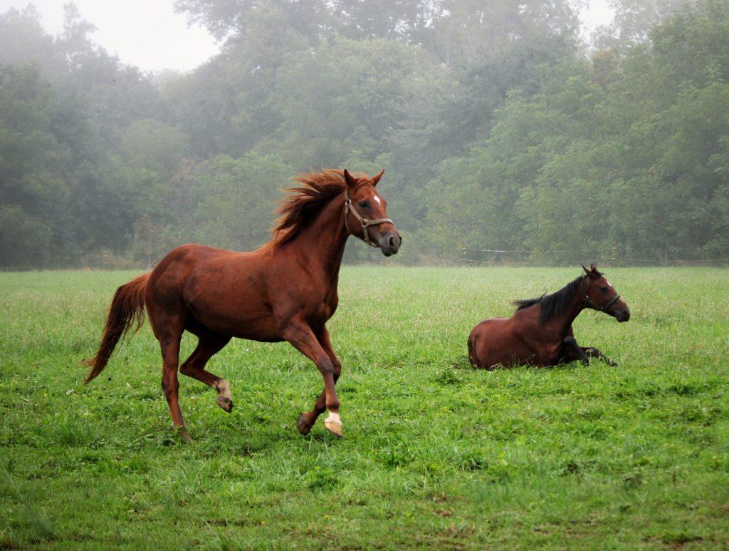 eviter-et-soigner-tendinite-du-cheval-2