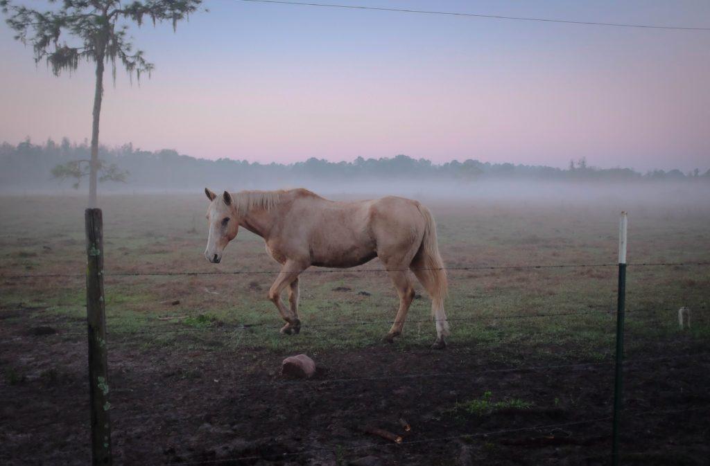 eviter-et-soigner tendinite chez le cheval-3
