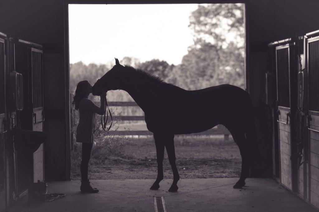 eviter-et-soigner-tendinite-du-cheval-4