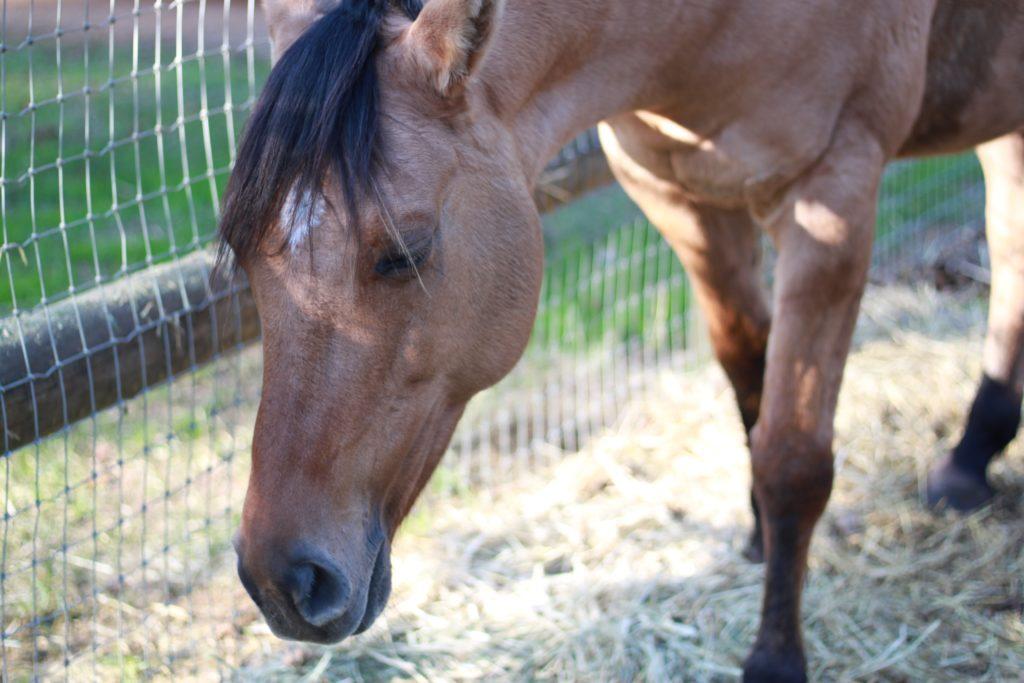 eviter-et-soigner-tendinite-du-cheval-5