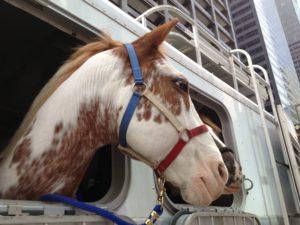 transporter-son-cheval-2