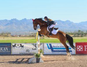 displines equestres olympiques