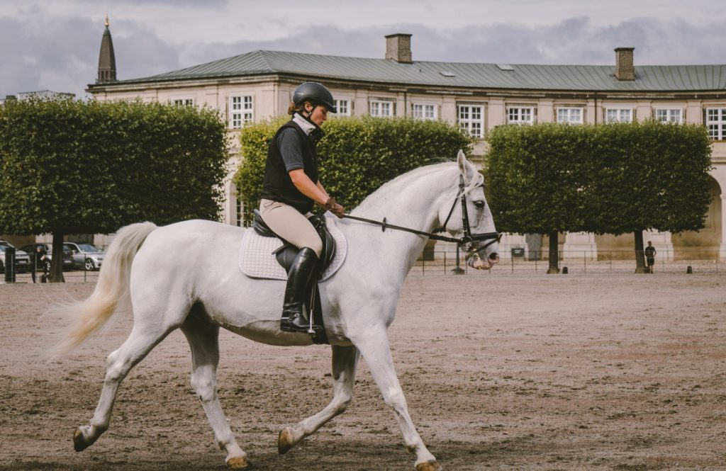 redemarrer-saison-concours-equestre-2