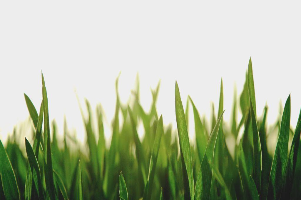 RW 18 - La mise à l'herbe
