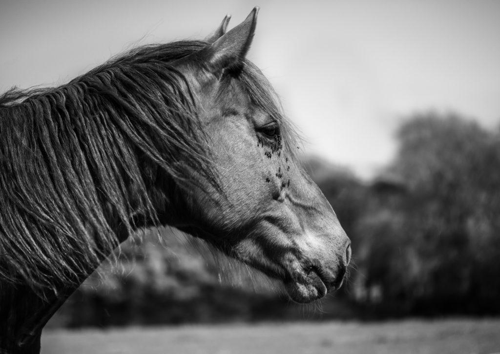 cheval et insectes