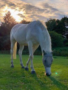 mise à l'herbe de votre cheval