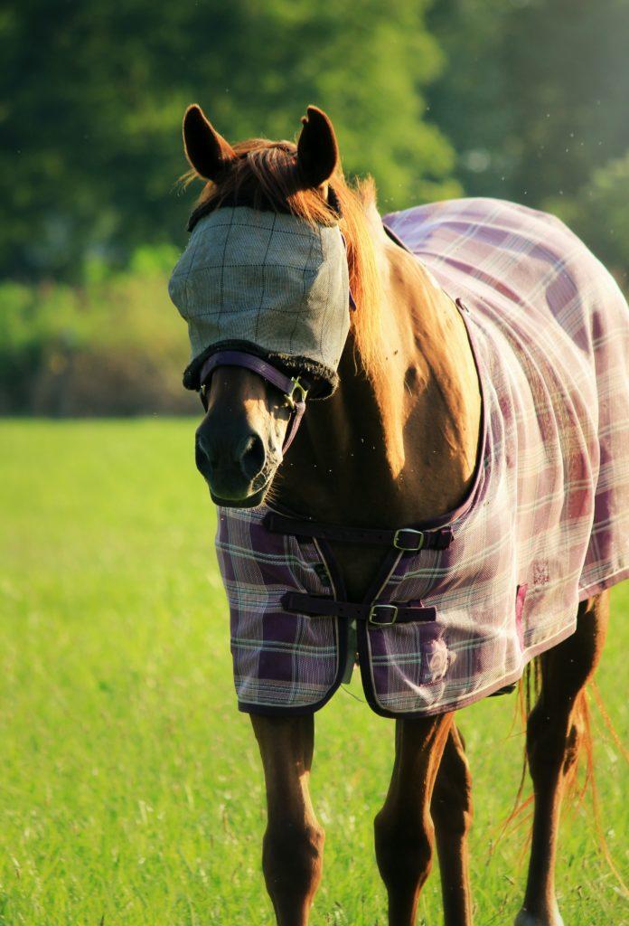 proteger votre cheval contre les insectes