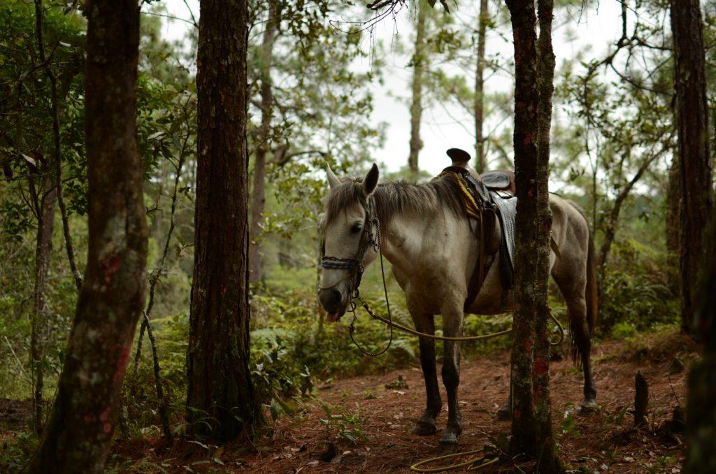 pucage des chevaux