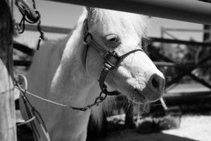 Ennui chez le cheval