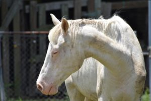 cheval malade