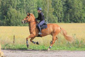 figures de dressage cheval equitation