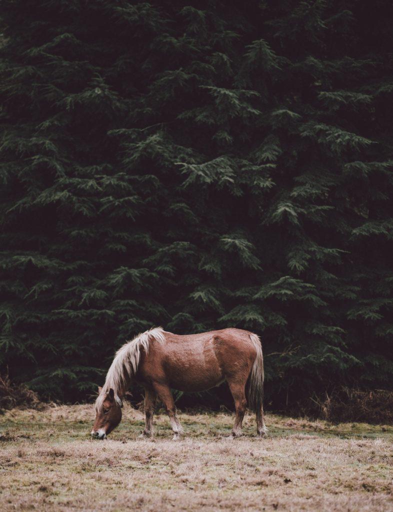 mettre un cheval a la retraite