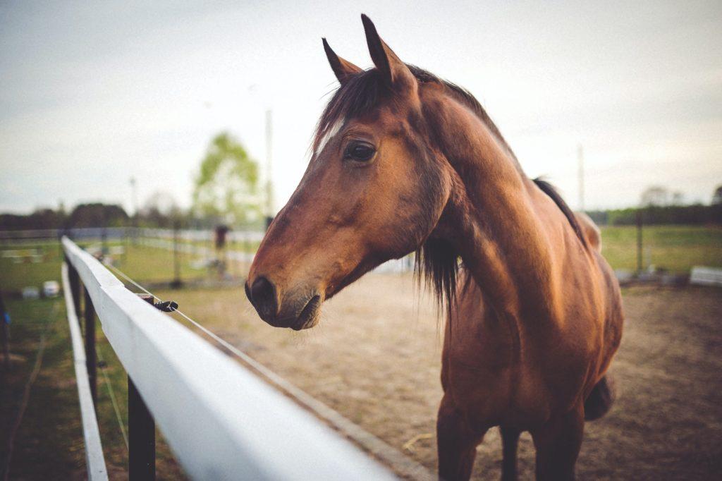 pathologies du vieillissement du cheval