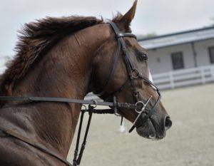 stress chez le cheval