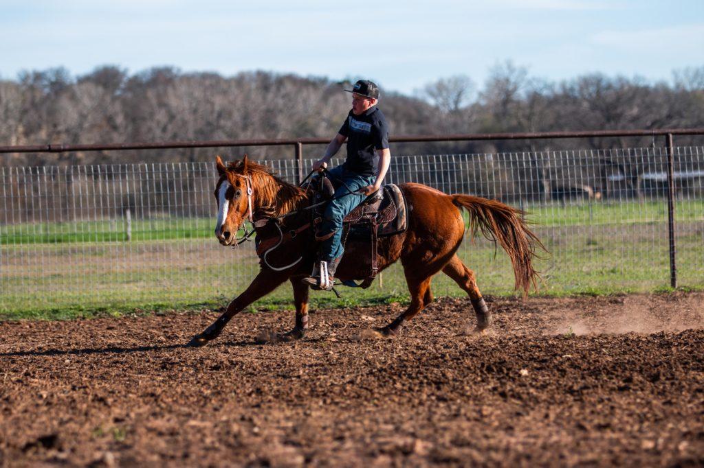 travail enrenement cheval