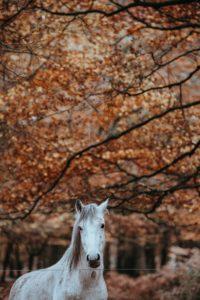 chevaux en automne