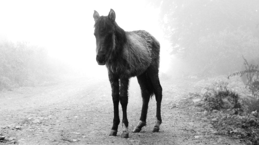 peur des chevaux