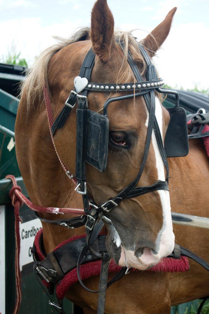 peur du cheval