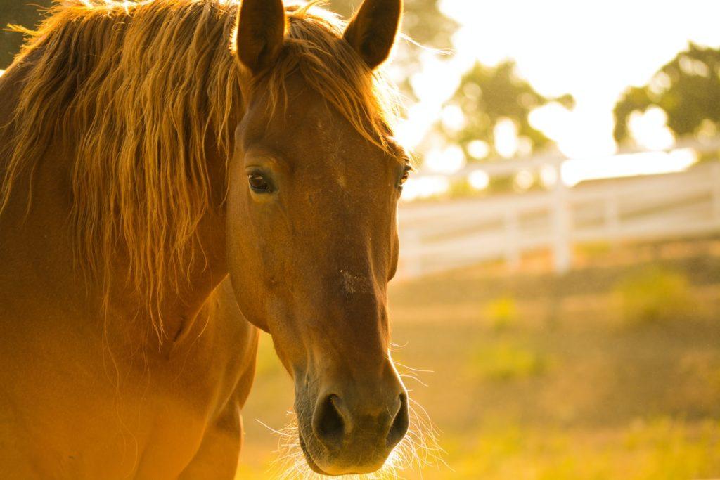 pansage du cheval