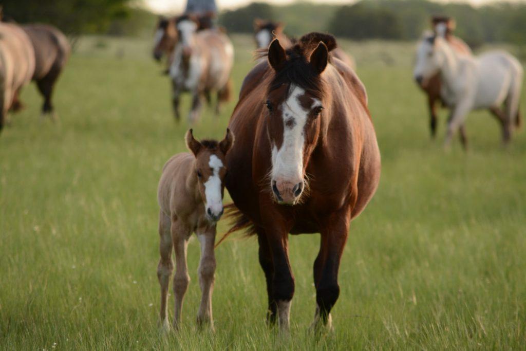 les bienfaits du cheval