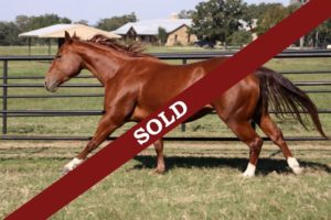 Acheter le bon cheval