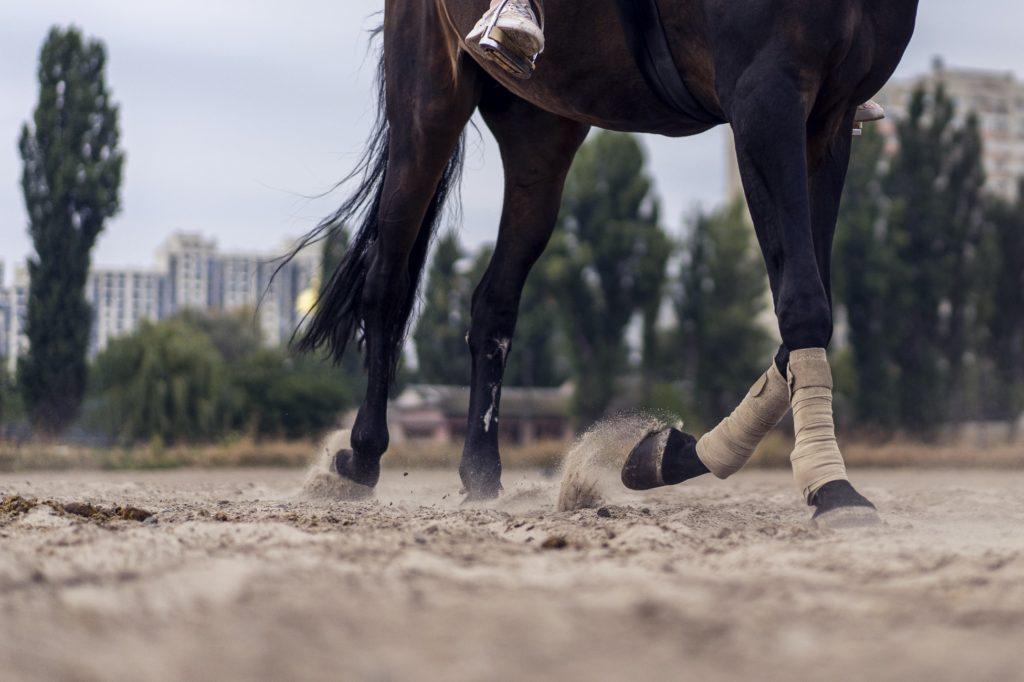 allures du cheval