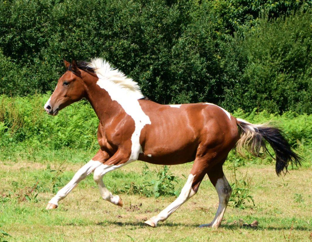 Robes du cheval