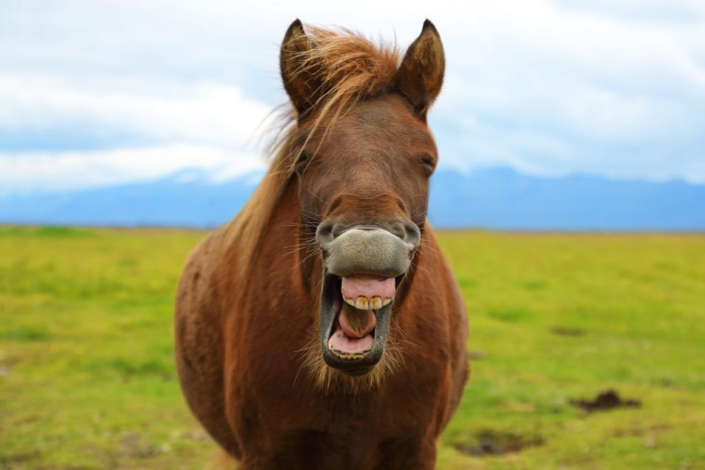 dents du cheval