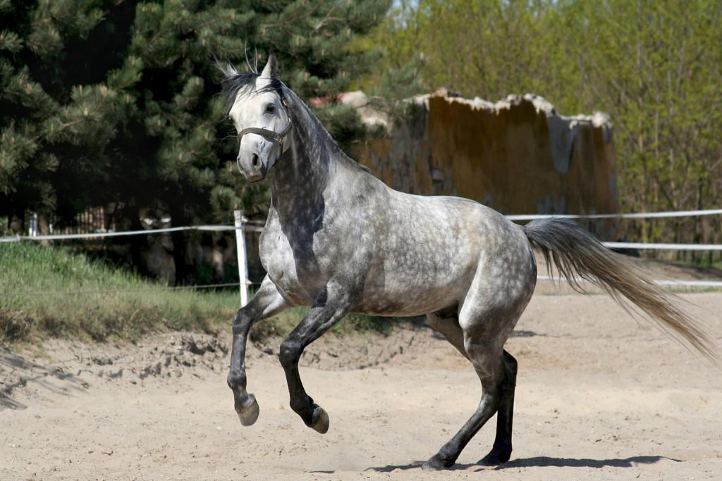 travail avec les chevaux