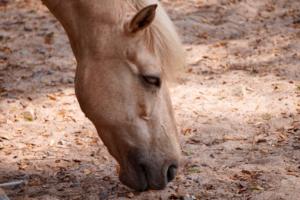 la fatigue du cheval