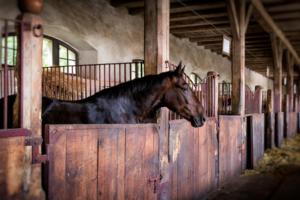 entretenir la litiere du cheval