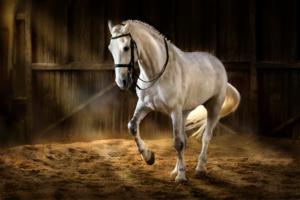 La rectitude du cheval