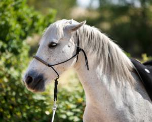 La punition dans l'équitation